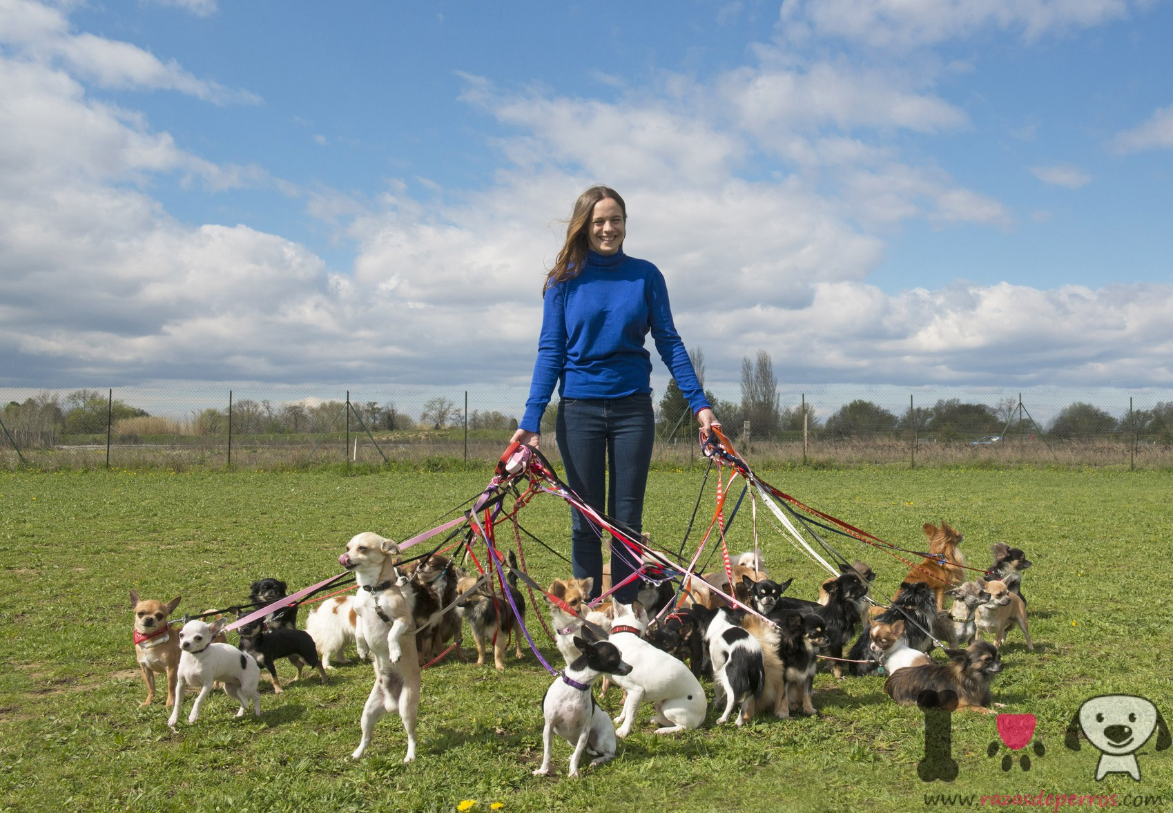 How To Take Dogs Together Walking Dog Sitter