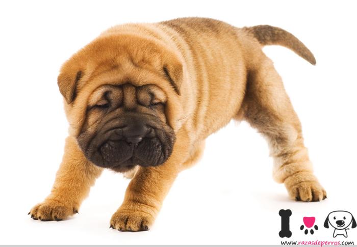 cachorro con 2 meses