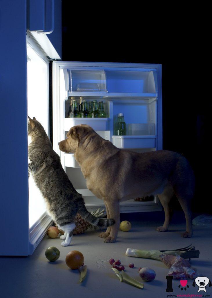perros roband comida