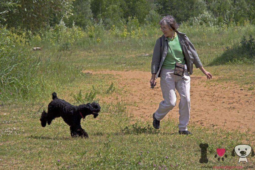 mujer paseando con Kerry blue terrier