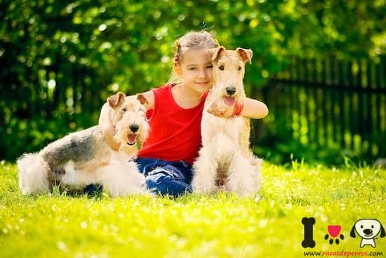 dos perros fox terrier en el parque