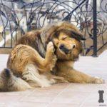 Pulgas y Garrapatas en perros