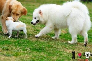 perros se conocen en el parque paseando