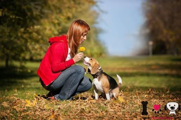 beagle monstrandole cariño a su dueña en el parque