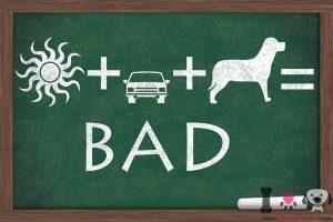 no dejes a tu perro en el coche