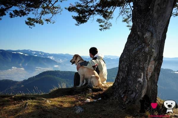 hombre con su perro mayor en el campo