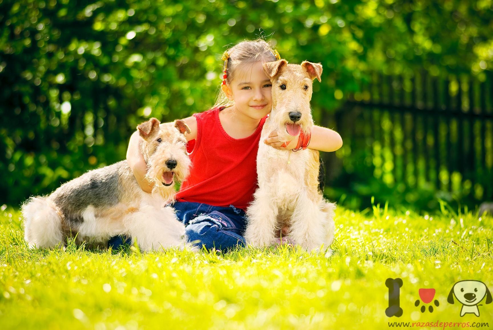 niña con dos fox terriers