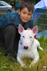 razas de perros: bull terrier