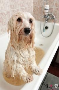 bañando a nuestro perro