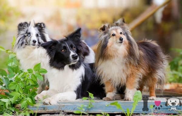 los perros más inteligentes