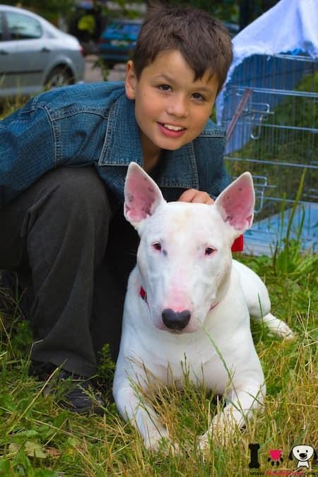 niño con su perro bull terrier blanco