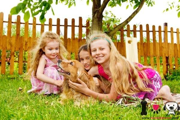tres niñas con su cachorro golden retriever