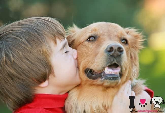 niño con su perro golden retriever