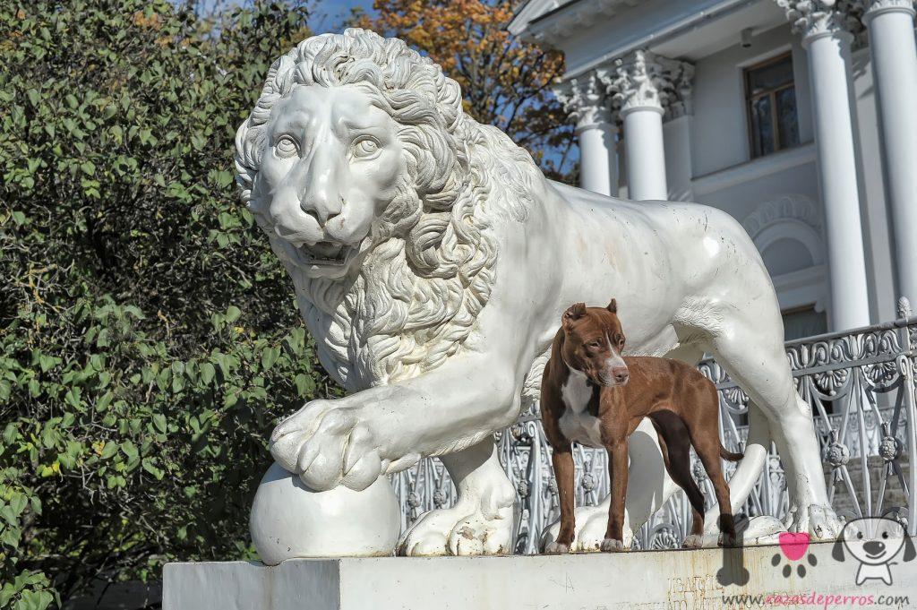 pitbull junto a estatua