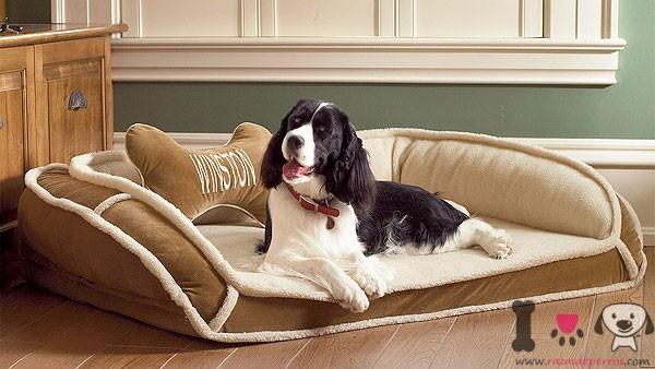 Perro grande tumbado en su cama