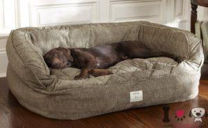 Perro en su cama grande