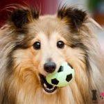 precioso perro con su pelota de juguete