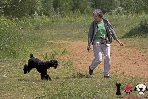mujer con un kerry blue terrier