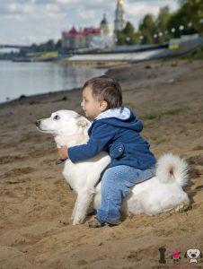 Niño sentado encima de su perro