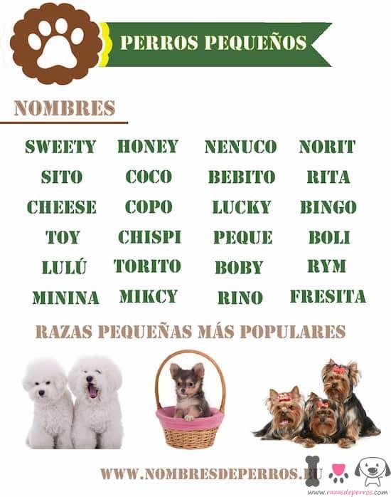 nombres perros machos