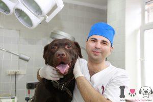 por que tu perro vomita, veterinario