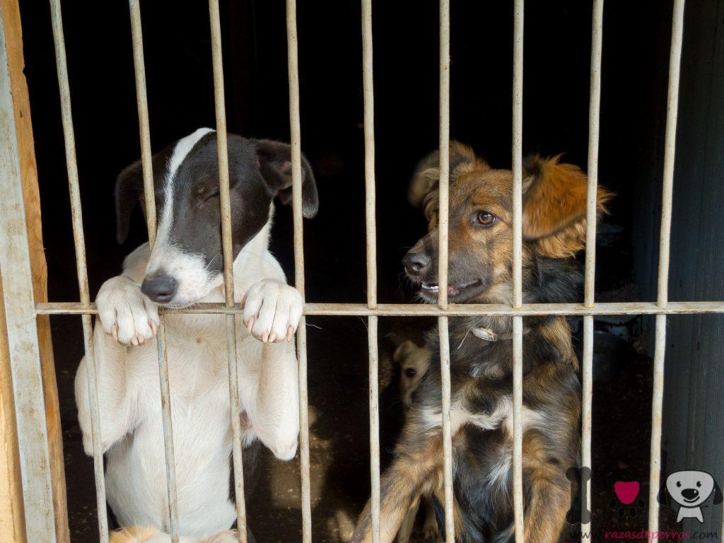 dos perros mestizos en la jaula
