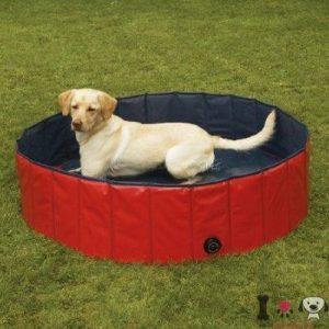 piscina para perro labrador retriever