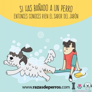 dibujo de perro siendo bañado por su dueño