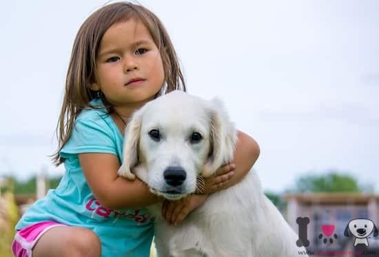 Niña rubia con un perro labrador retriever