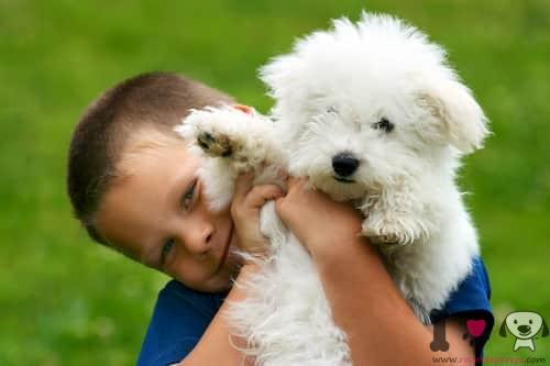 niño con perro pequeño hipoalergénico