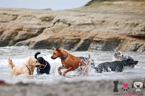 Perros grandes socializando