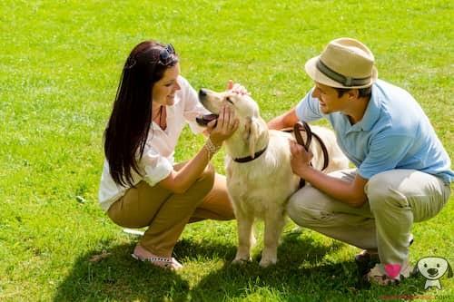 Pareja con su perro golden retriever
