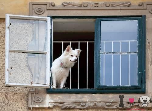 Perrito asomado a la ventana