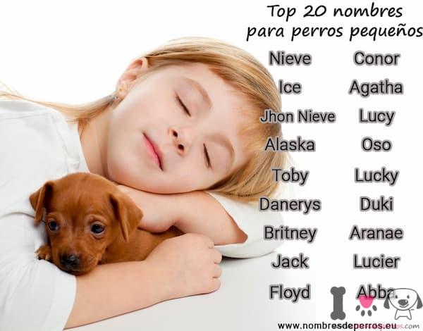nombres de perros pequeños