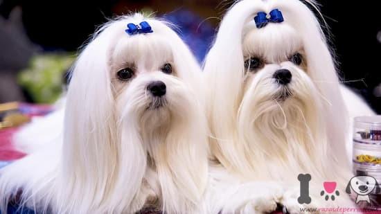 mejores nombres para perros hembras