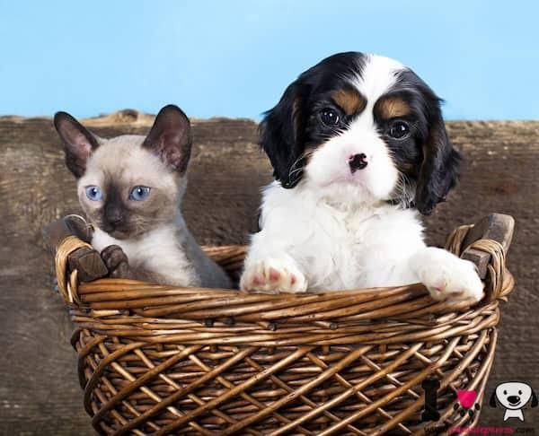 cachorro con un gato en una cesta