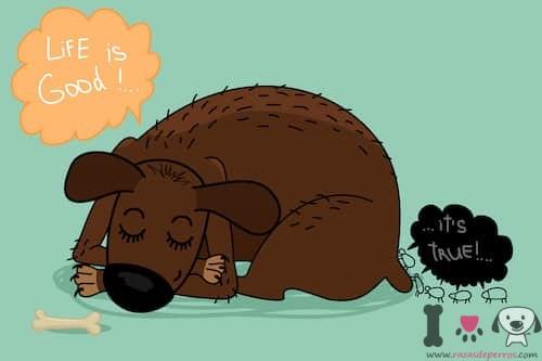caricatura perro y pulgas