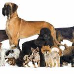 ¿Cuántas razas de perro hay en el mundo?