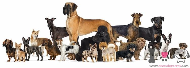 cuantas razas de perros hay en el mundo