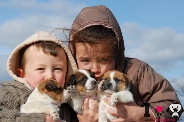dos niños con sus cachorros