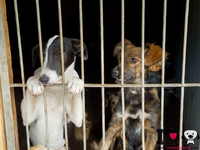 dos perros en la perrera