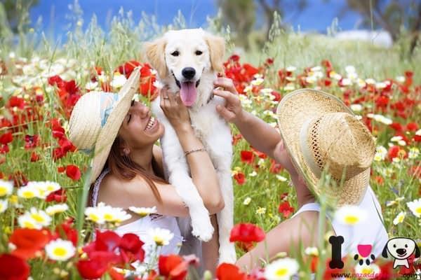 mujer con su perro libre de pulgas y garrapatas
