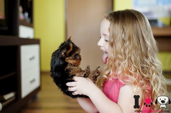 niña con su cachorro yorkshire terrier
