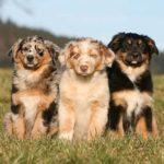 Nombres para perros en inglés