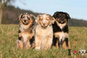 nombres ingleses para perros