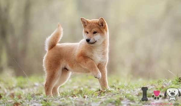 nombres japoneses para perros