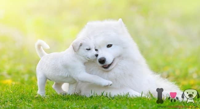 cachorro blanco con su madre