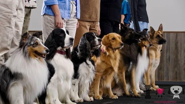 nombres de perros alemanes