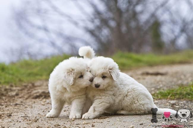 nombres para perros blancos