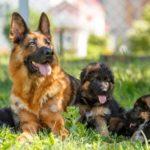 Nombres alemanes para perros